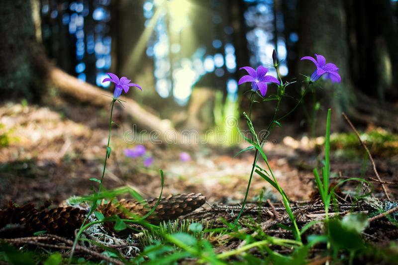 A beautiful mountain landscape. Picture of purple flowers growing in mountain forests, in the shade of trees. Peace and peace in stock image
