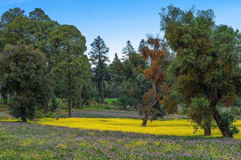 Beautiful mountain landscape with purple and yellow flowers stock image