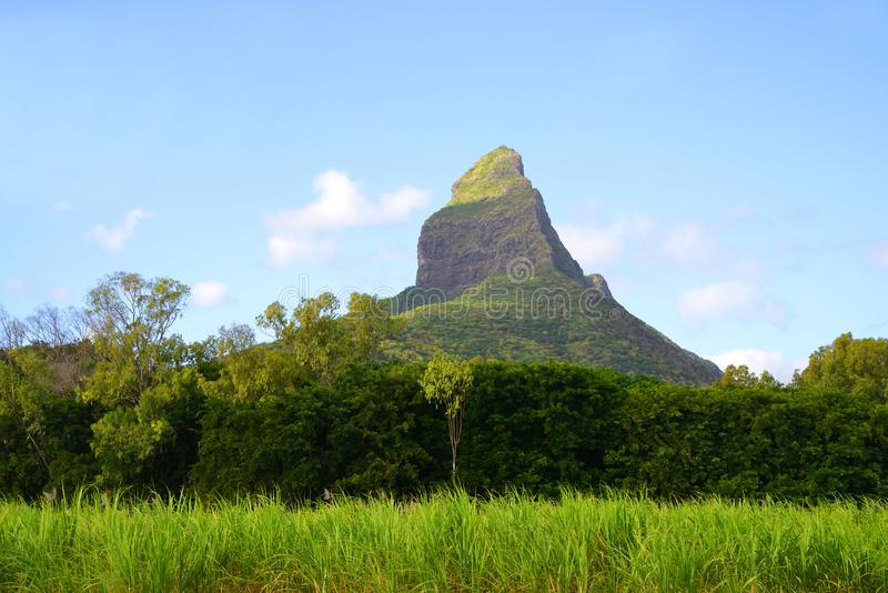 Beautiful mountain landscape with sugar cane field and Mount Rempart in Mauritius island. Indian Ocean stock photography