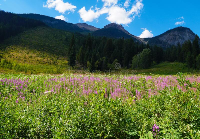Colorful Wildflowers Dress Up a Mountain Meadow. A beautiful mountain meadow in summer filled with pink and white wildflowers stock photography