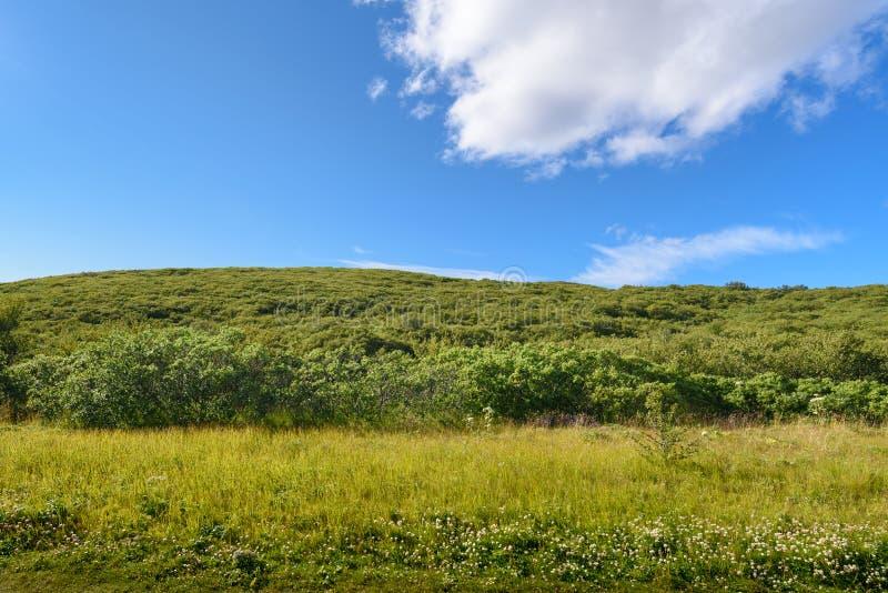 Beautiful mountain range and green tree, Iceland stock image