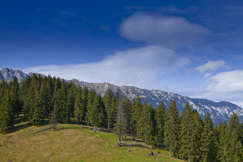 Beautiful mountain scenery and pine trees stock photo image of download beautiful mountain scenery and pine trees stock photo image of mountains cliff voltagebd Images