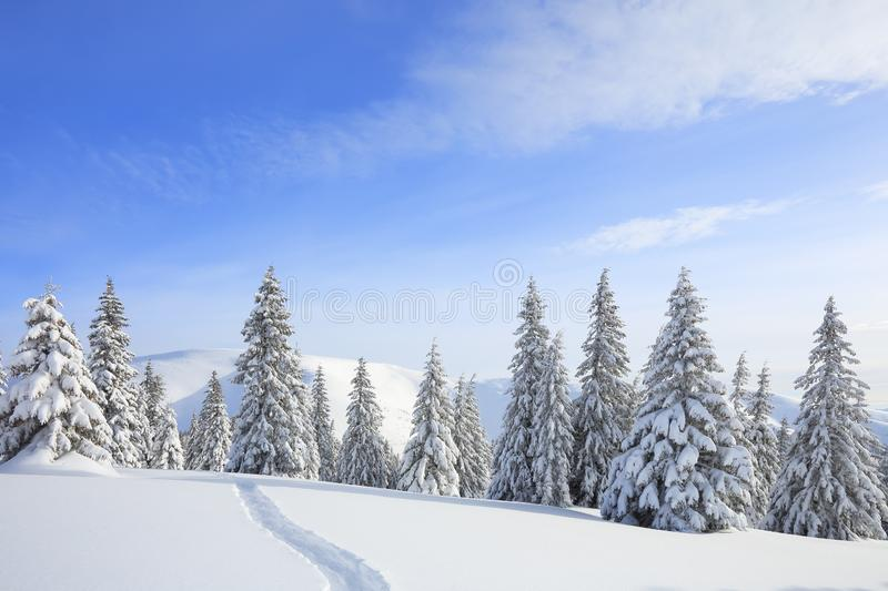 Beautiful mountain scenery. Winter landscape with trees in the snowdrifts, the lawn covered by snow with the foot path. New Year royalty free stock photo