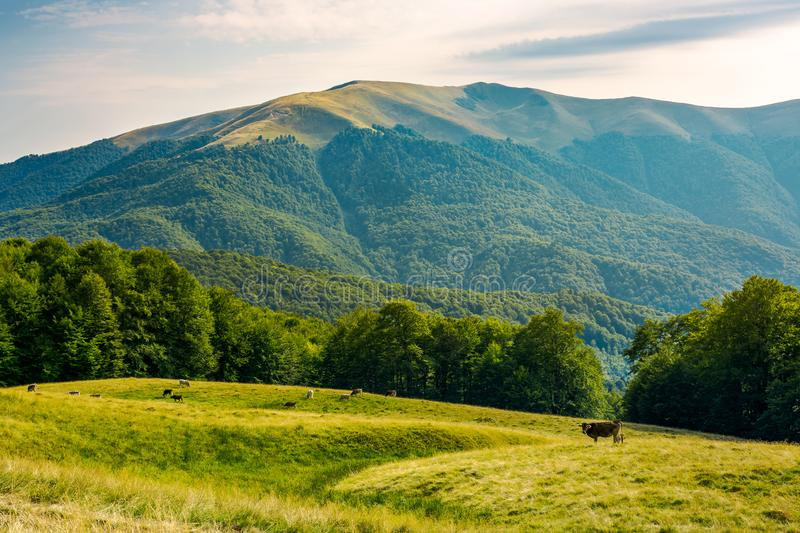 Beautiful mountainous countryside afternoon royalty free stock images
