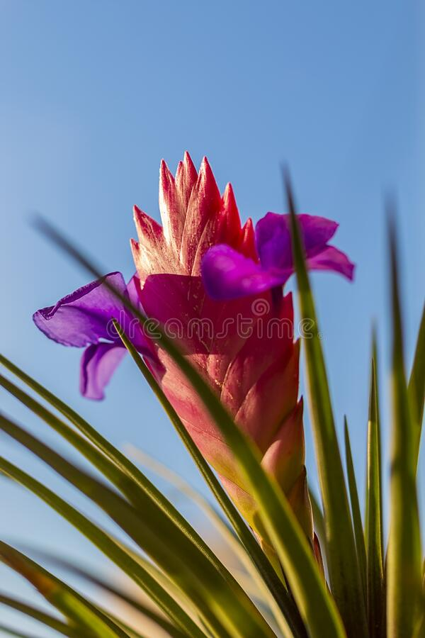 Beautiful multi-colored flower royalty free stock image