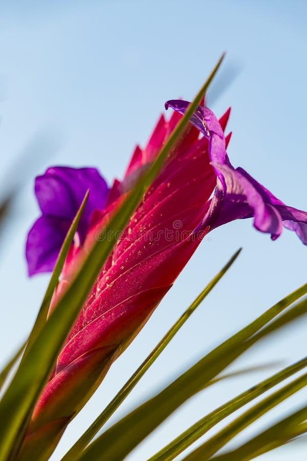 Beautiful multi-colored flower stock photo