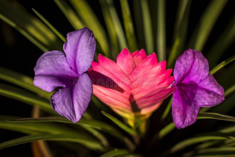Beautiful multi-colored flower stock photos
