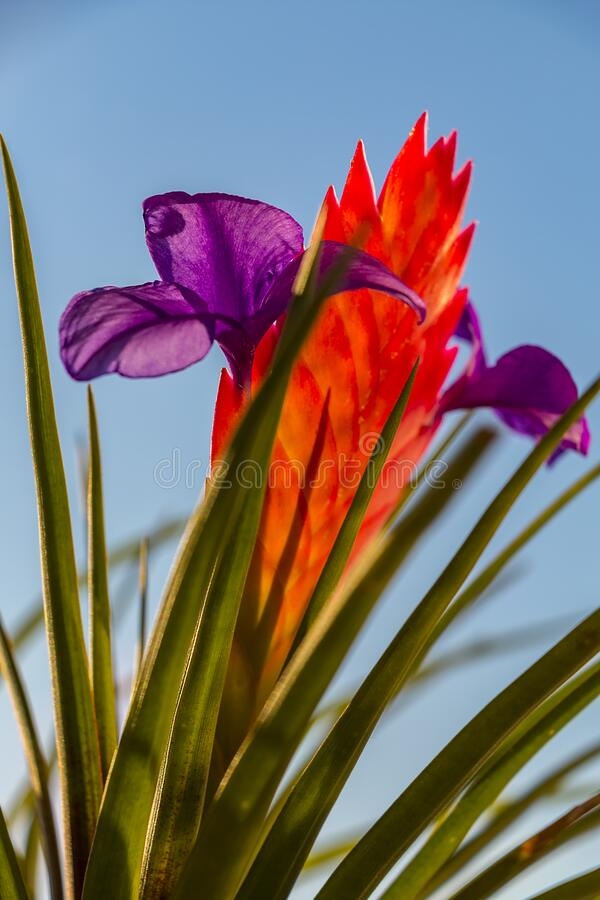 Beautiful multi-colored flower stock images