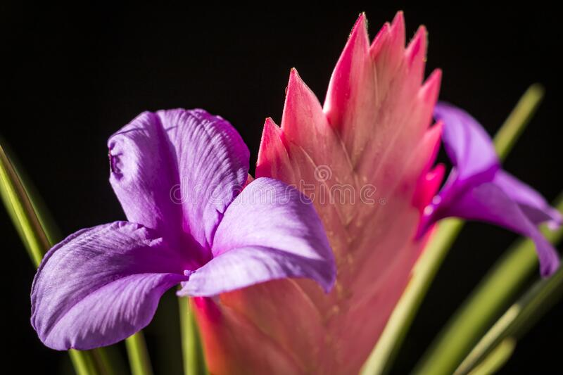 Beautiful multi-colored flower stock photography