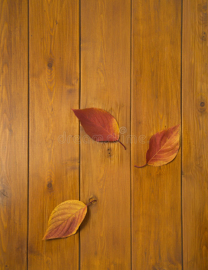 Beautiful multi-colored leaves on wooden boards stock photography