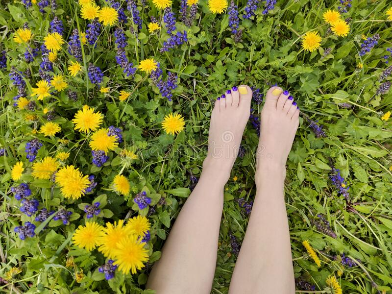 Beautiful multi-colored yellow, blue, purple pedicure on a female feet with different summer flowers royalty free stock images