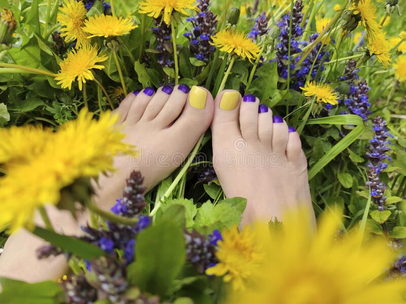 Beautiful multi-colored yellow, blue, purple pedicure on a female feet with different summer flowers royalty free stock photos