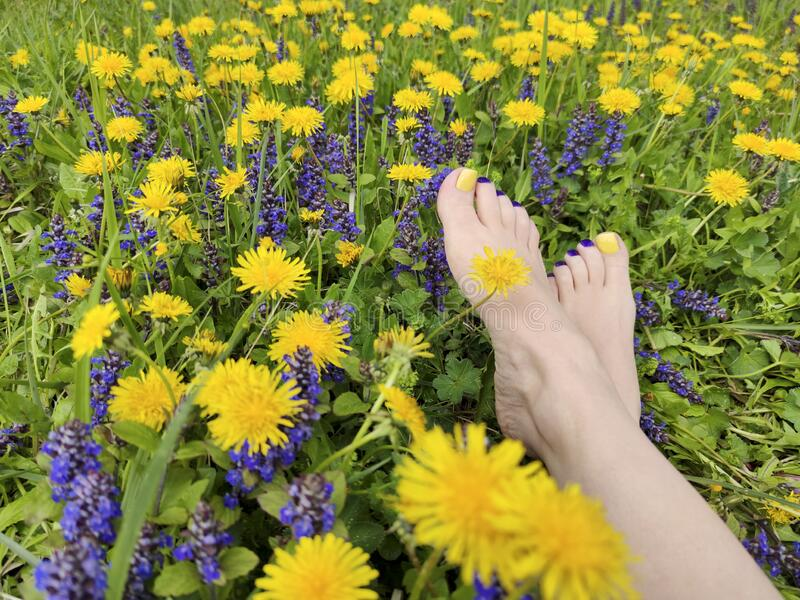 Beautiful multi-colored yellow, blue, purple pedicure on a female feet with different summer flowers stock photos