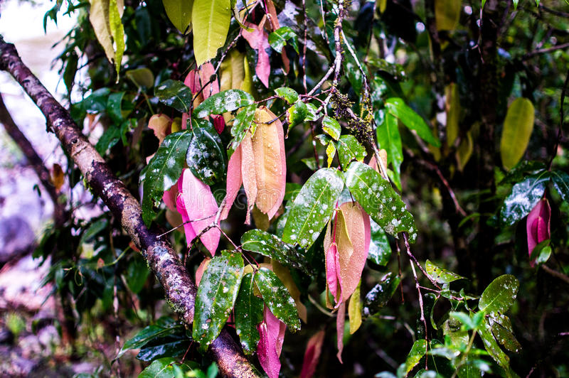 Beautiful Multi-Coloured Leaves royalty free stock photos