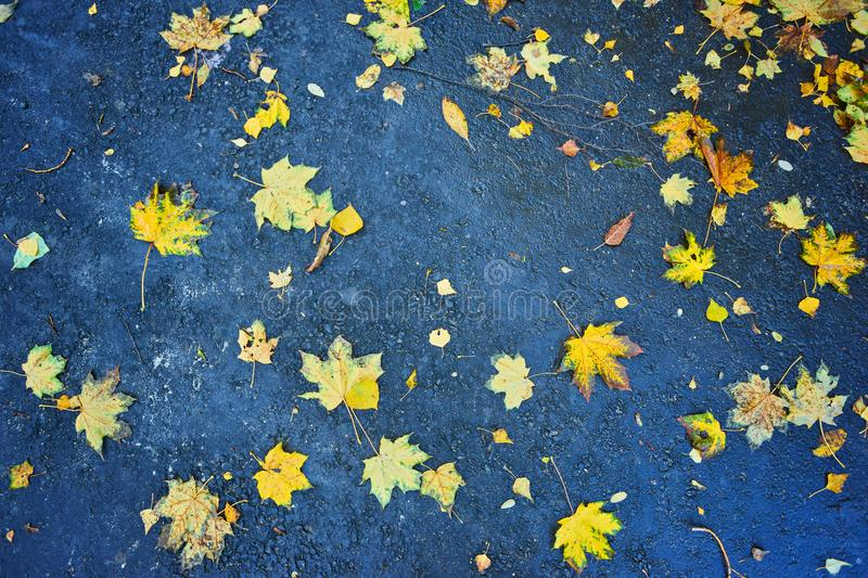 Beautiful multicolor autumn leaves leaves with rain drops on dar royalty free stock photo