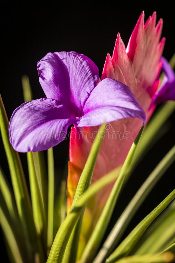 Beautiful multi-colored flower royalty free stock photography