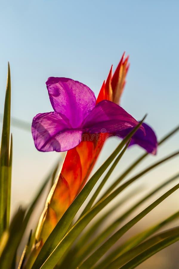 Beautiful multi-colored flower stock image