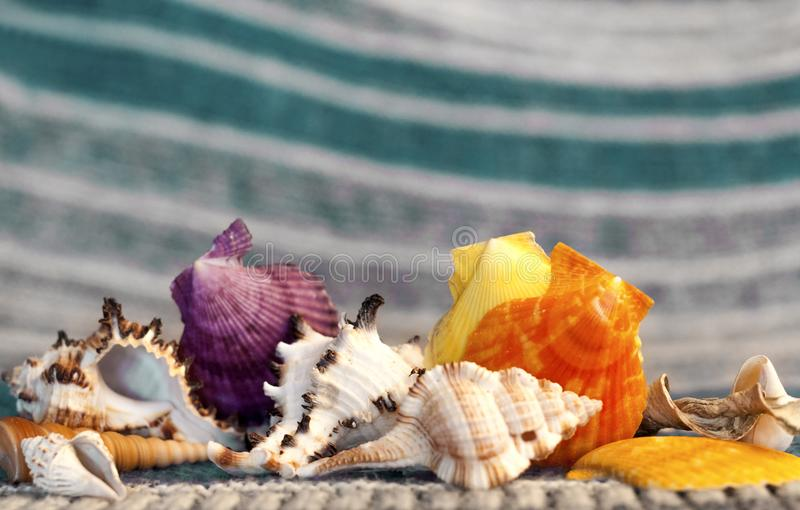 Beautiful sea shells on a background of turquoise waves stock photography