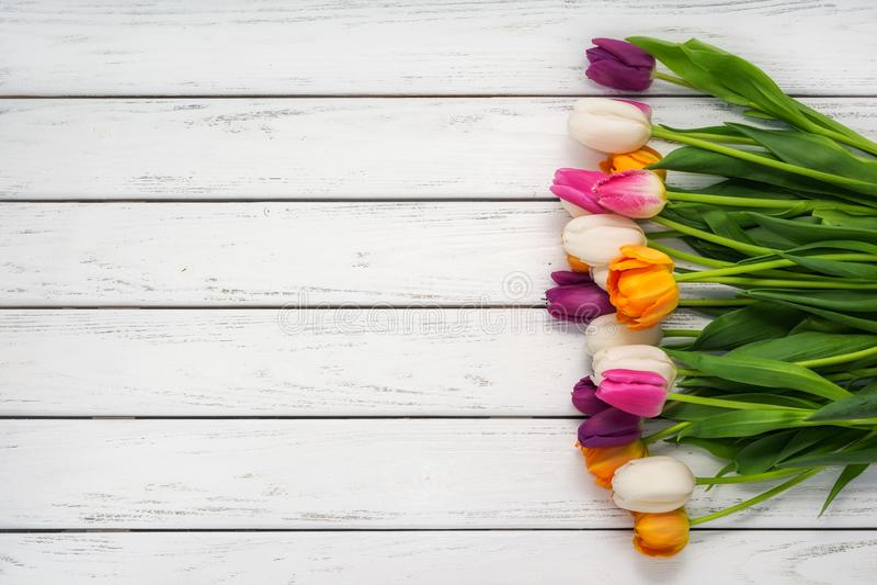 Beautiful tulips background stock images