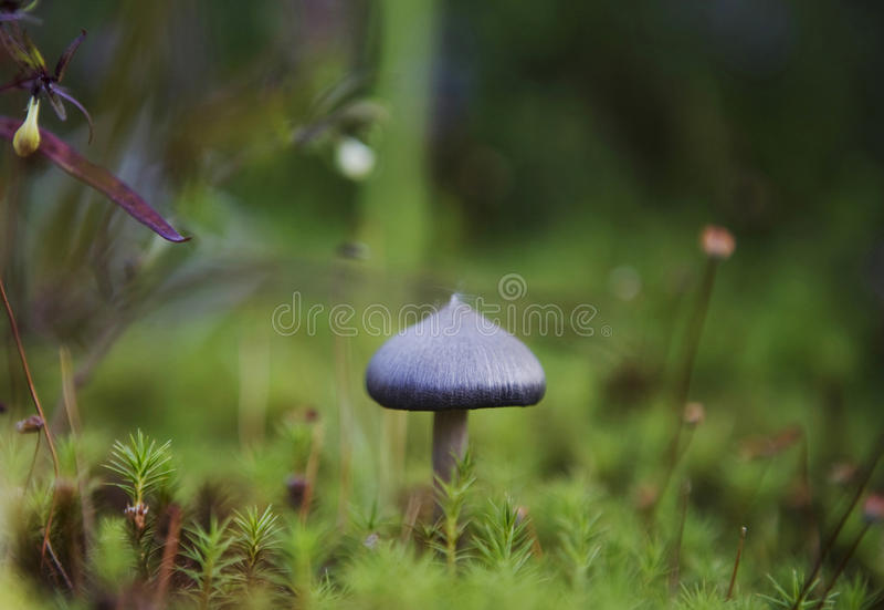 Beautiful Mushroom Stock Photos