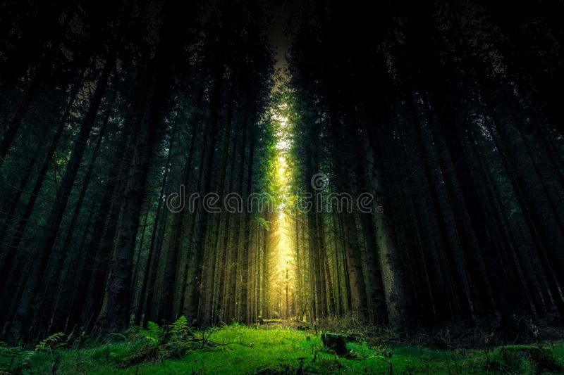 Beautiful mystical forest and sunbeam - Fantasy Wood. Background stock photo