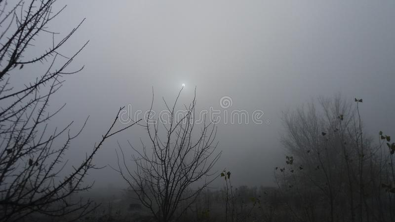 Beautiful mystical surrealistic morning landscape in foggy weather with little dim sun on tree branch. Beautiful mystical surrealistic morning landscape in cold royalty free stock photos