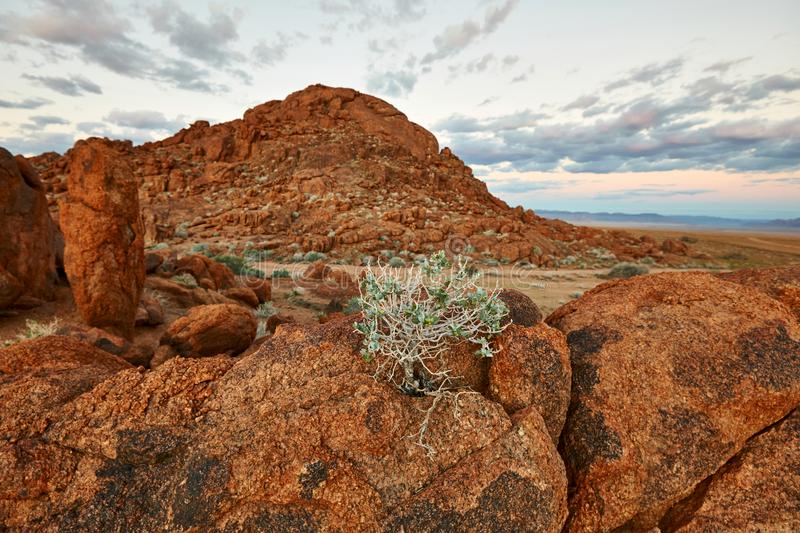 Beautiful Namibian landscape focus on the foreground. Namibian sunset landscape with a plant and big red rocks focus on the foreground stock images