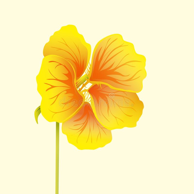 Beautiful nasturtium isolated on light background. Yellow and orange bright flower. Botanical realistic art. Hand drawn detailed stock illustration