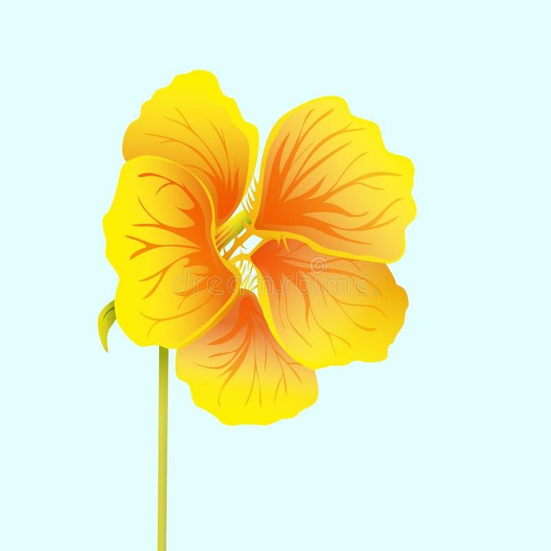 Beautiful nasturtium isolated on light blue background. Yellow and orange bright flower. Botanical realistic art. Hand drawn vector illustration