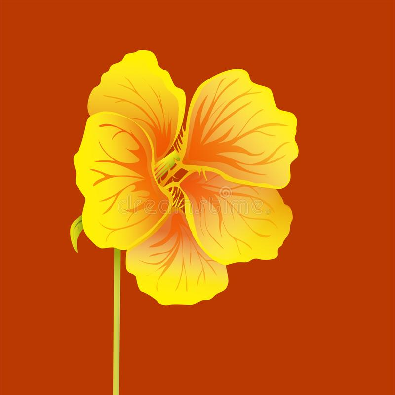 Beautiful nasturtium isolated on red background. Yellow and orange bright flower. Botanical realistic art. Hand drawn detailed vector illustration