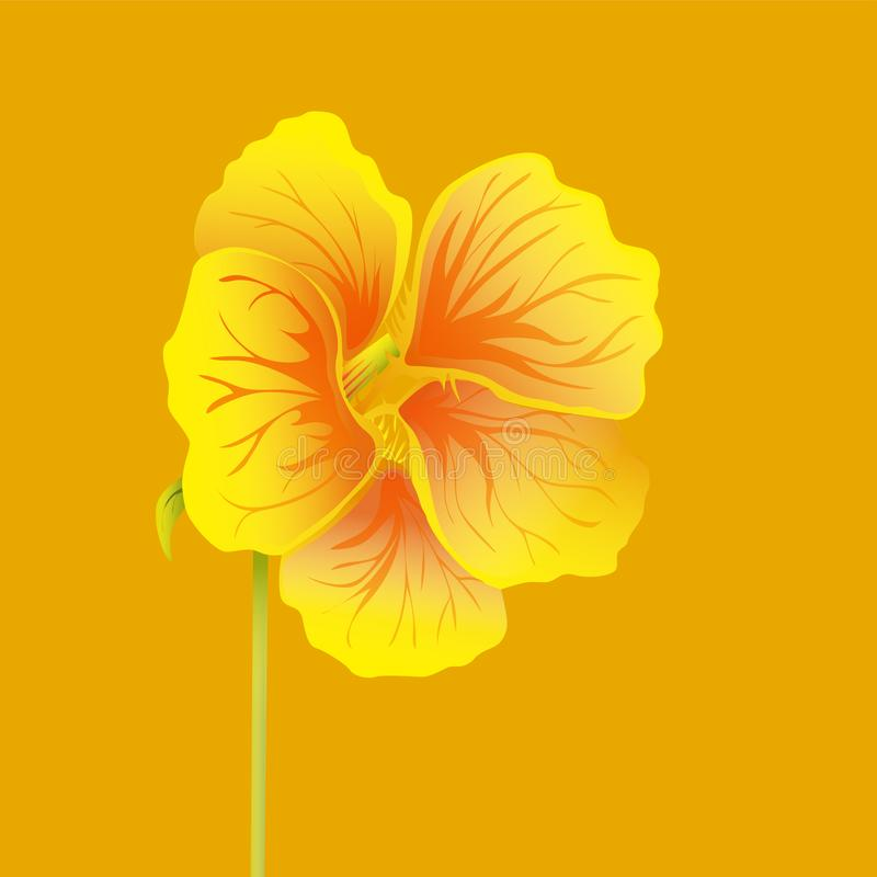 Beautiful nasturtium. Yellow and orange bright flower. Botanical realistic art. Hand drawn detailed vector illustration. royalty free illustration