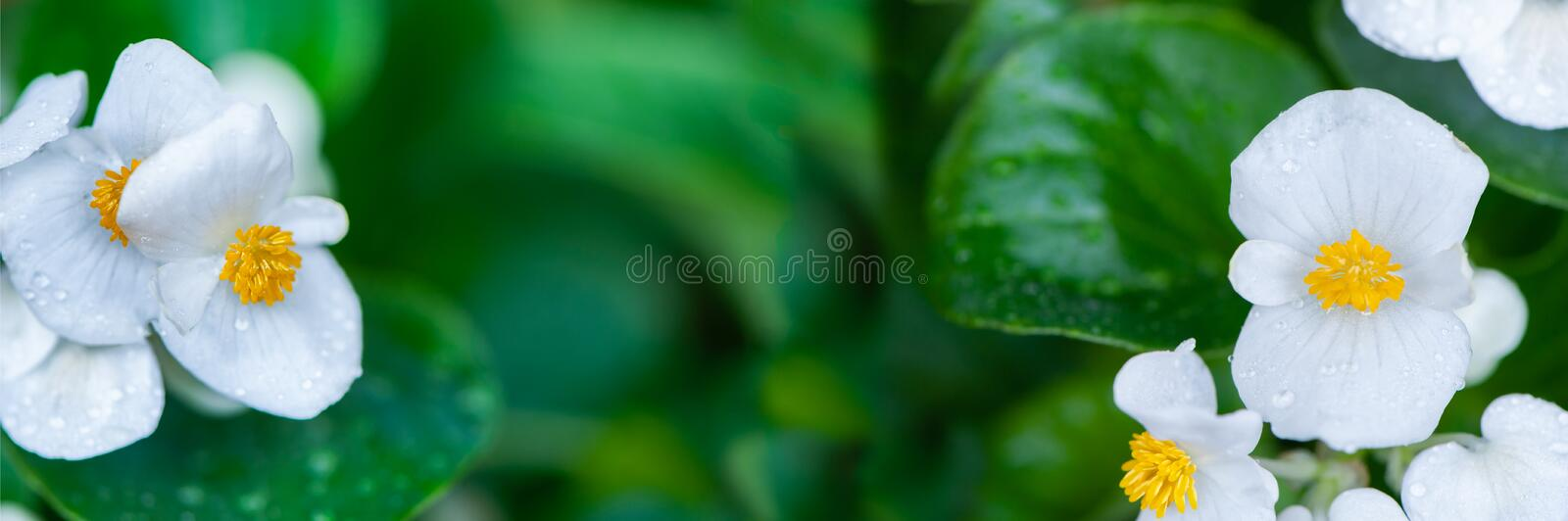 Beautiful natural background border with fresh juicy foliage  and flowers , panorama, stock photos