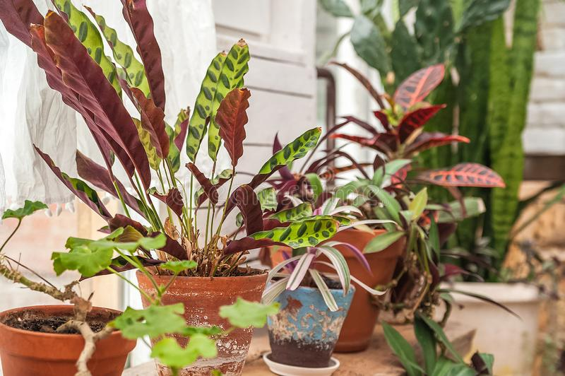 Beautiful natural background of indoor plants, greenhouses. Urban jungle, a place for rest and relaxation. Orchids, indoor plants. In pots stock image