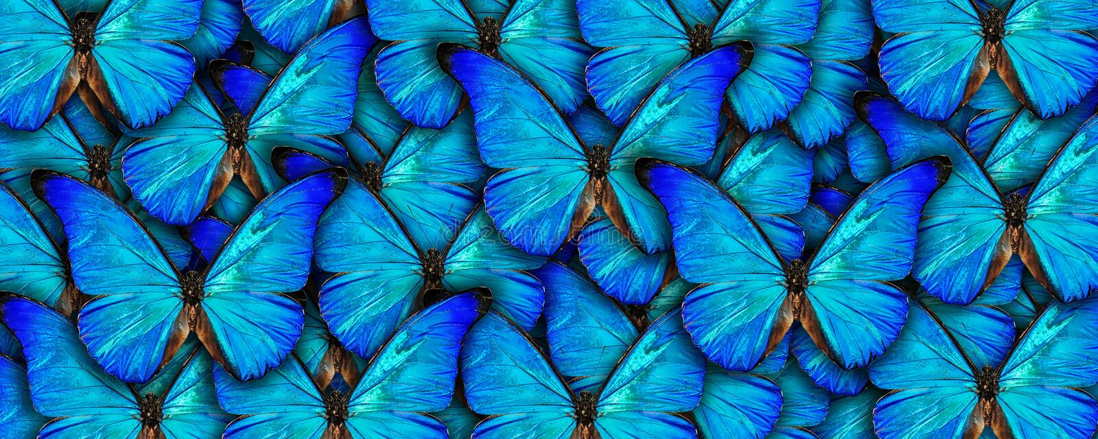 Beautiful natural background with a lot of vibrant blue butterflys. Photo collage art work. A high resolution vector illustration