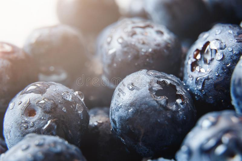 Beautiful natural background. Summer, spring concepts. Ripe and juicy fresh picked blueberries close-up in the gentle rays of the. Warm sun. Copy space royalty free stock photos