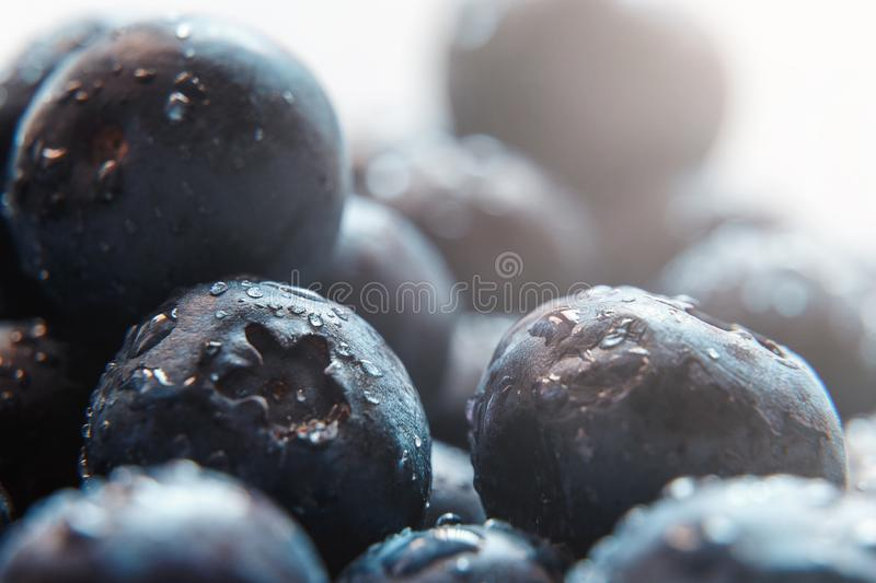 Beautiful natural background. Summer, spring concepts. Ripe and juicy fresh picked blueberries close-up in the gentle rays royalty free stock image