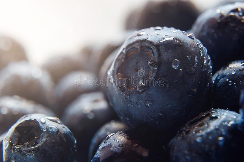 Beautiful natural background. Summer, spring concepts. Ripe and juicy fresh picked blueberries close-up in the gentle rays of the. Warm sun. Copy space stock photos