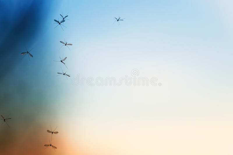 Beautiful natural background with sunset and a bunch of flying m royalty free stock photo