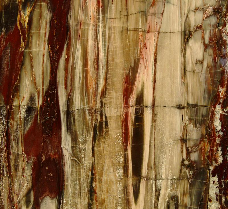 Beautiful natural background texture of nice petrified wood nice petrified wood in red and yellow colors royalty free stock image
