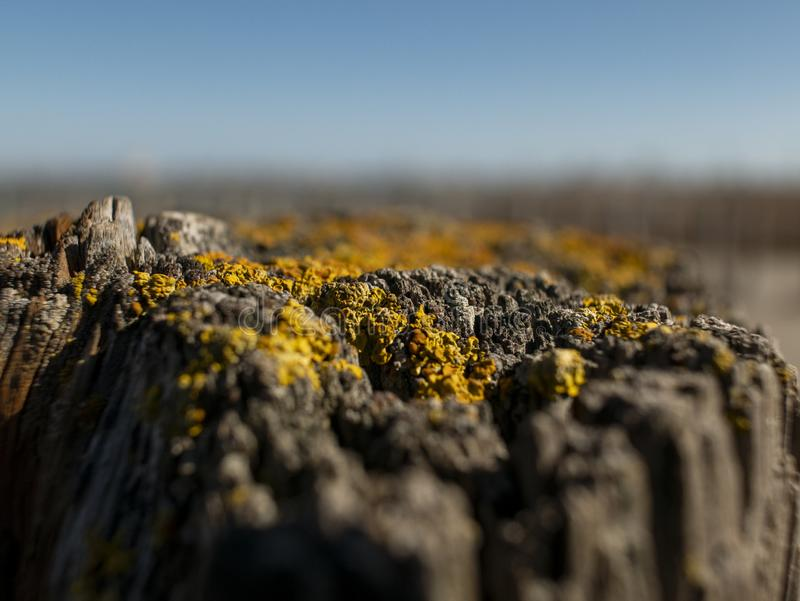 Beautiful natural dry stump with moss against the sky. Wooden background royalty free stock photography