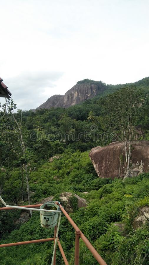 Beautiful natural green color forest of srilanka. This is beautiful natural green color forest of srilanka and this is real image stock image