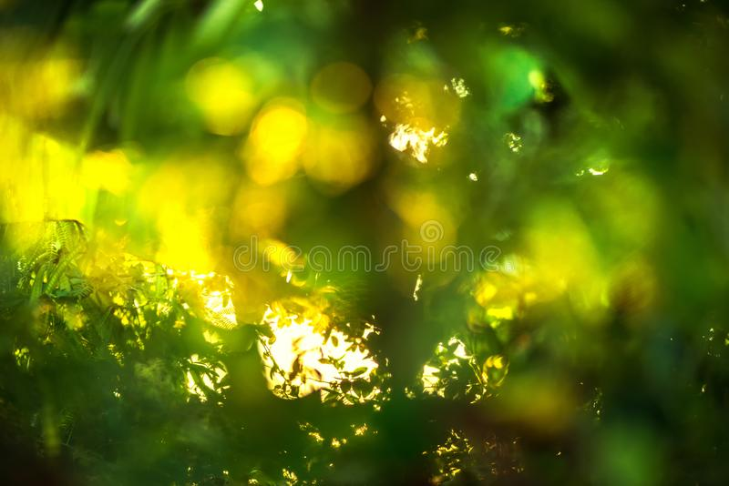 beautiful Natural green leaf with sunset and abstract blur bokeh light background stock photo