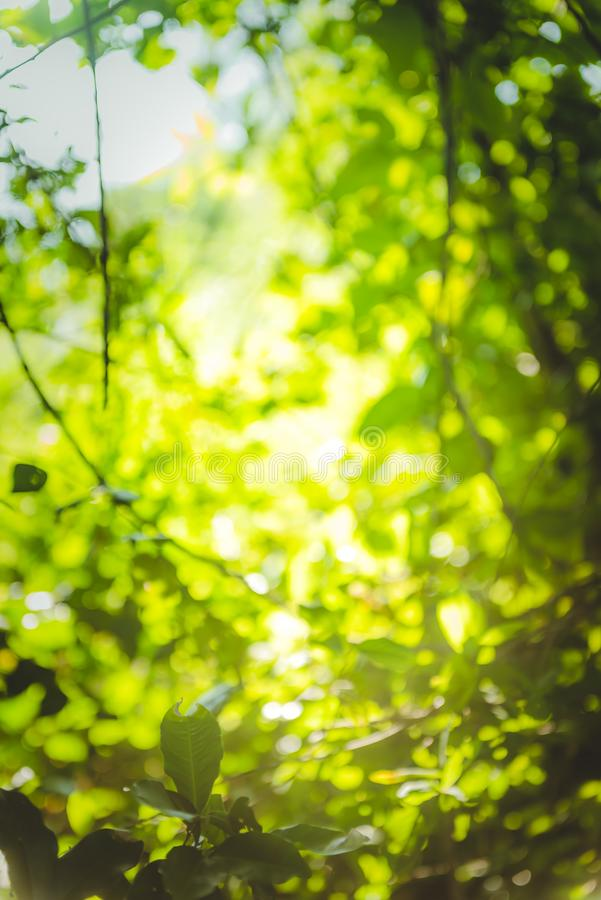Beautiful Natural green leaf and abstract blur bokeh light background royalty free stock photos