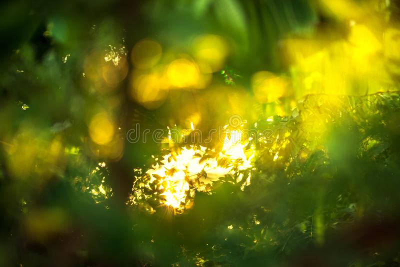 beautiful Natural green leaf with sunset and abstract blur bokeh light background royalty free stock photos