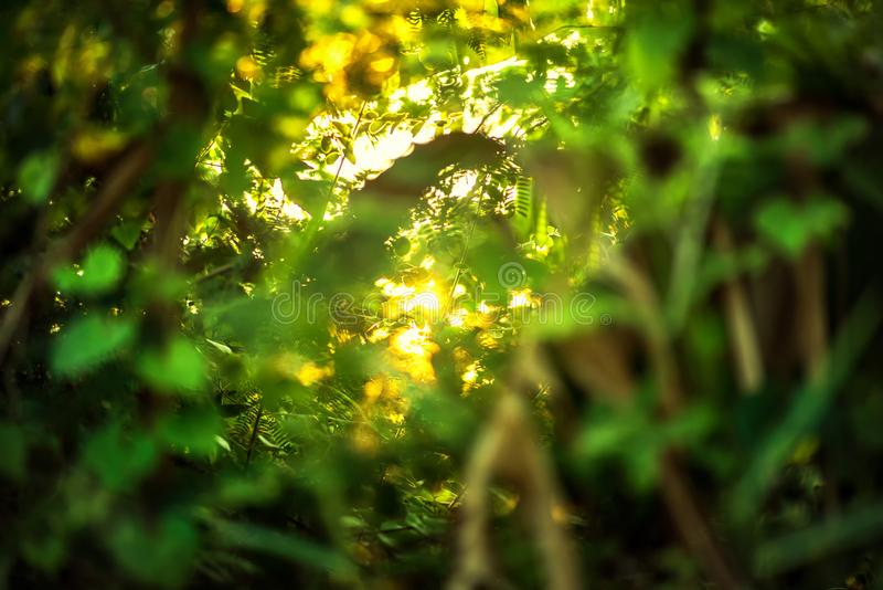 beautiful Natural green leaf with sunset and abstract blur bokeh light background royalty free stock image