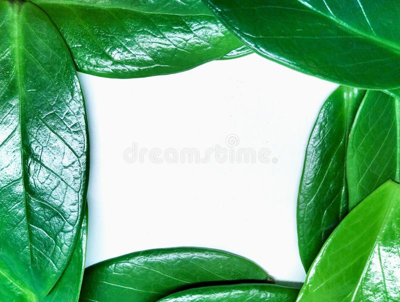 Beautiful natural green leaf frame background royalty free stock photo