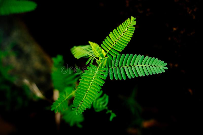 Beautiful natural green leaves stock images