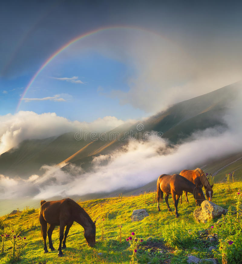 Beautiful natural landscape with animals royalty free stock photo
