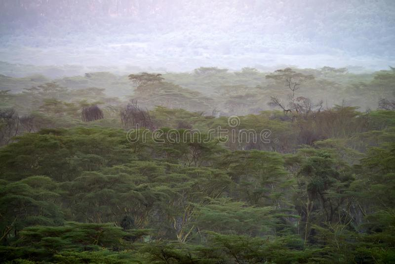 Beautiful natural landscape with foggy African savannah royalty free stock photography