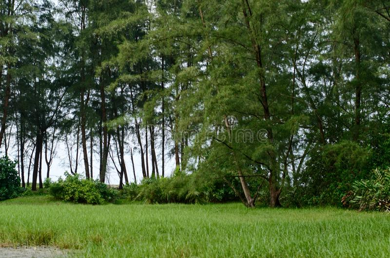 Beautiful natural landscape in the summer time. Nature, green, wallpaper, background stock photos